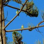 lovely-green-birds-in-spain